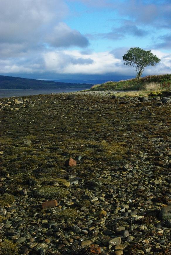 seaweed, tree, kyles of bute