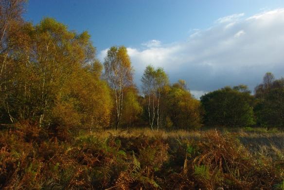edge of the woods, autumn