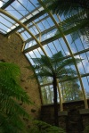 benmore fernery, interior