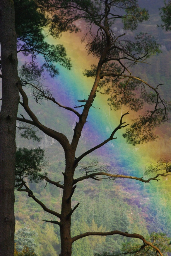 rainbow through trees, benmore gardens