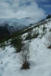 cowal hills, winter, snow