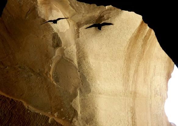 cave, birds