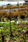 iris shoots, loch fyne