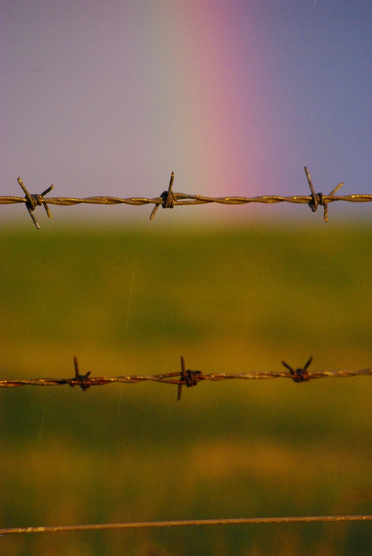 rainbow, barbed wire