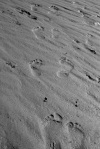 footprints, pilgrimage