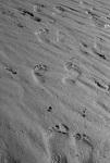footprints, pilgrimage