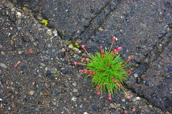 Flower, concrete