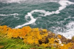 Lichen, cliff top