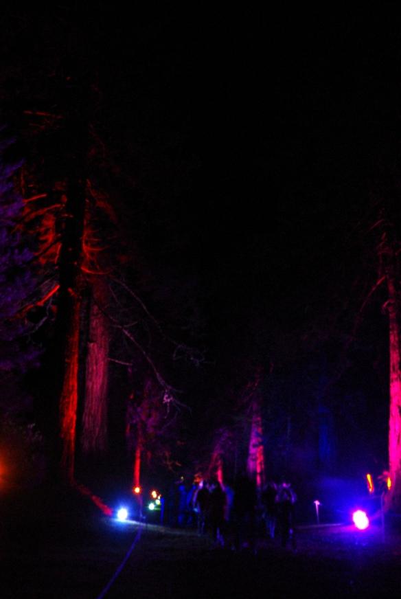 Redwood avenue