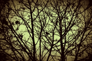 bird, winter tree