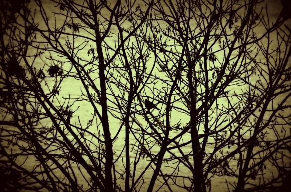 bird, winter tree