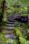old stairs, Argyll forest