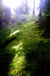 sunlight on moss beds
